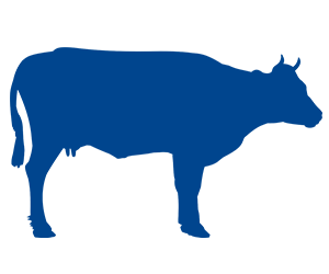 Cattle Health Care