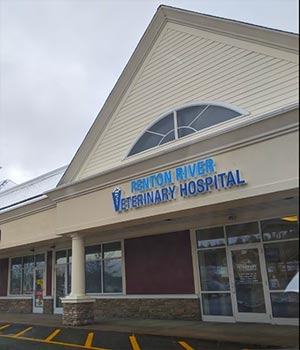 Animal Hospital in Tolland CT