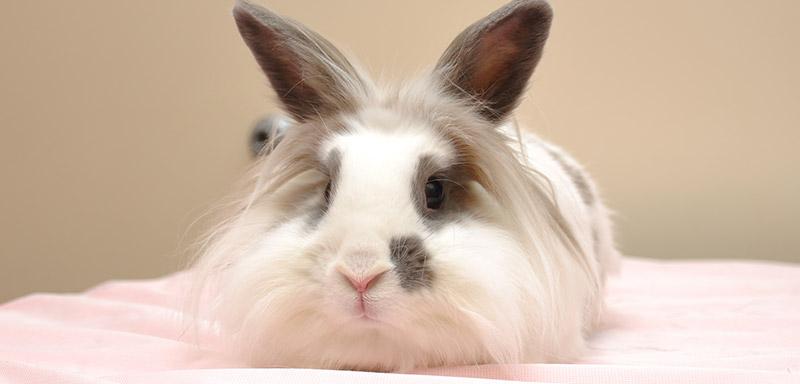 Educational Pet Links from Fenton River Veterinary Hospital
