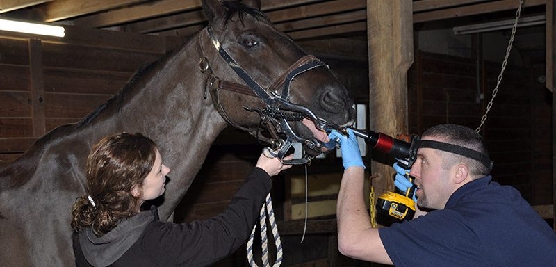 equine-dental-exams-floating