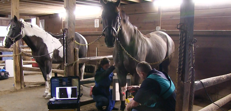 Equine Digital X-Ray at Fenton River Veterinary Hospital
