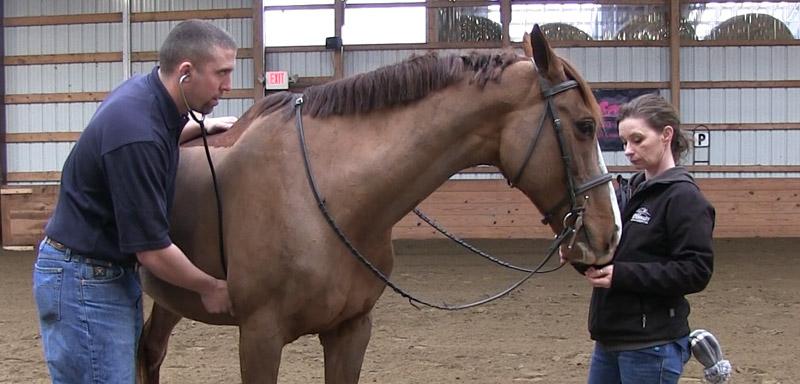 equine-exams