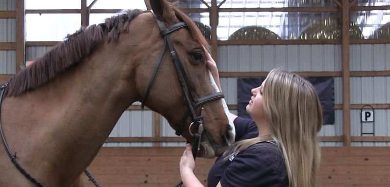 equine-wellness-care