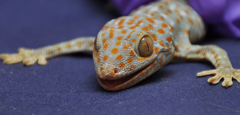 Exotic Pet Care at Fenton River Veterinary Hospital