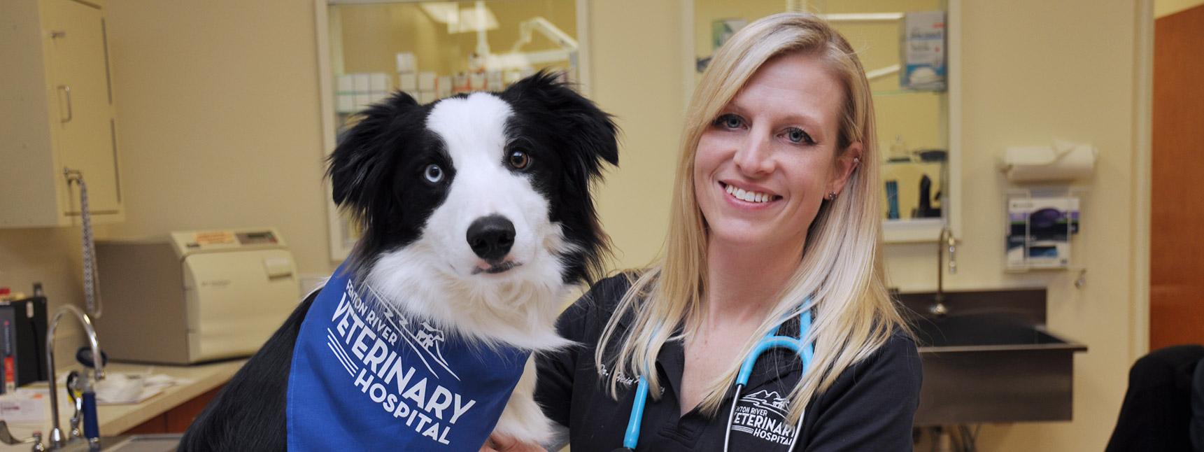 Small Animal Care at Fenton River Veterinary Hospital