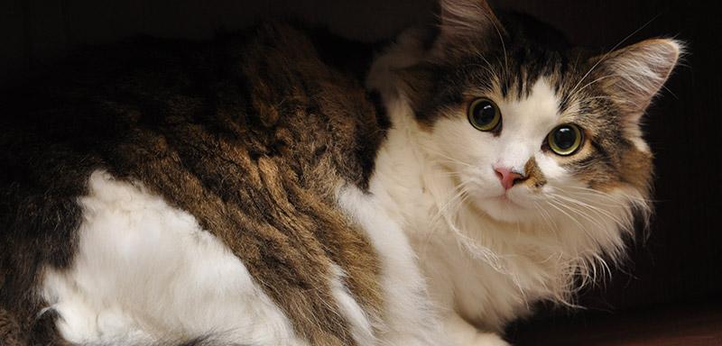 Senior Cat Care at Fenton River Veterinary Hospital
