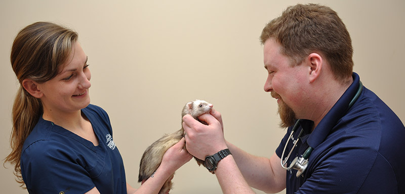 Small Mammal Care at Fenton River Veterinary Hospital