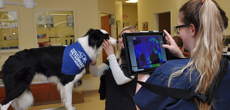 Pet Thermal Imaging at Fenton River Veterinary Hospital